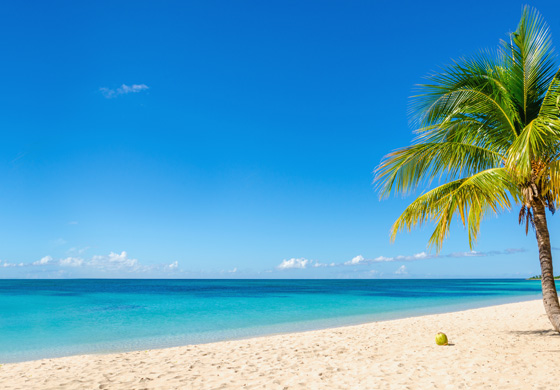 Tropical beach scene