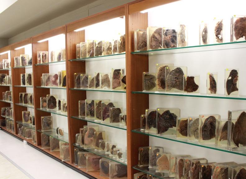 Pathology museum
