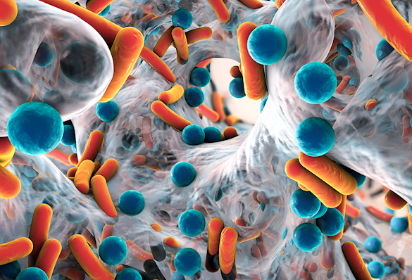 Biofilm of antibiotic resistant bacteria