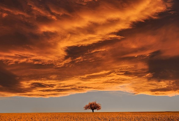 single tree in a field