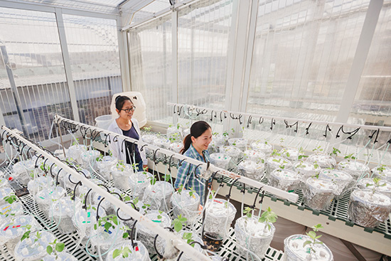Two students walking through plant growth facility