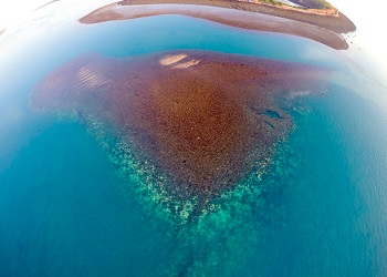 Coral bleaching in the Kimberley