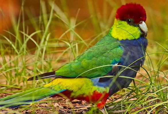 Colourful bird, very cute