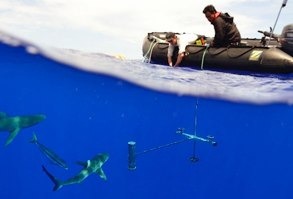 Underwater stereo cameras to record fish presence and abundance