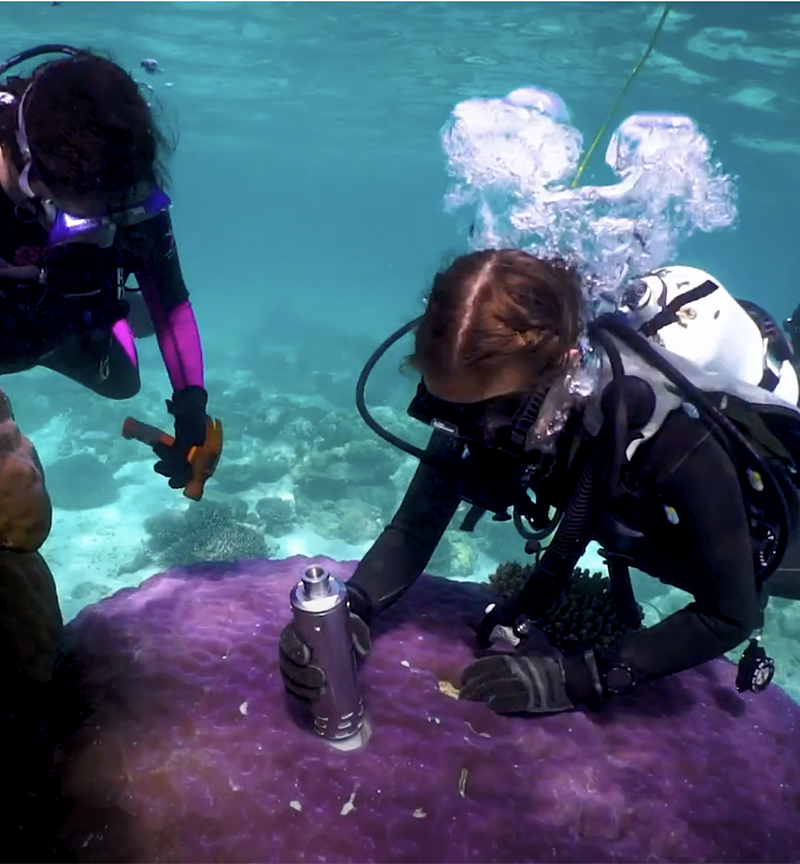 Researchers scuba diving and taking samples of corals at Ningaloo Reef
