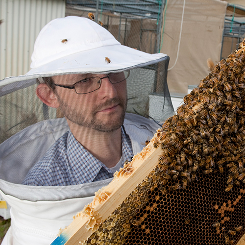 Future Fellow Professor Boris Baer from the Centre for Integrative Bee Research