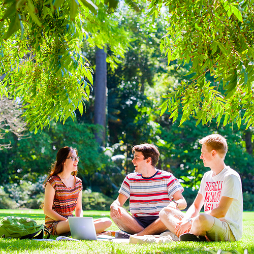 Unique student experience - students studying under tree on campus grounds